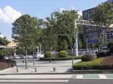 大美盛城3期美珑公园交通图