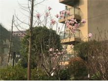 泰山绿谷2018.3.24