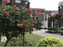 亿科红郡2018.4.28