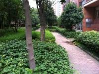 阳光花园98万3室2厅2卫精装修