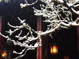 谁在院子里等待那场雪?