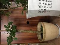 张湾总装厂四三小学对面精装二室