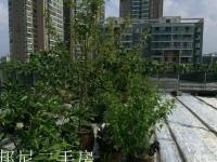 100平楼顶私家菜园.人民医院旁维多利亚中装大复式楼,带露台