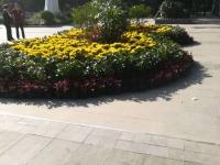 茅箭区  东方明珠城市花园